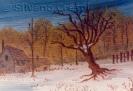 049 Il vecchio albero