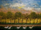 285 Cigni al tramonto