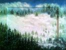 476 Bosco di pini tra le nuvole
